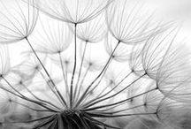 Paysages Noir et blanc
