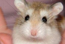 Fuzzy! / Fuzzy animals / by Brittany Kelso