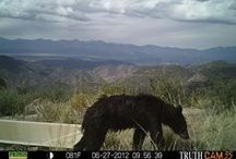 Critter Cam  / by Bureau of Land Management
