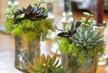 Succulentes / by Josée Giannetti