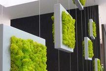 Murs et cadres végétals / by Josée Giannetti