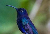 MIS COLIBRIES - HUMMINGBIRDS / by MARIA DEL CARMEN SANDOVAL