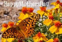 #HappyMothersDay / Wishing you a Happy Mother's Day from the BLM, these E-cards are free for you to use and share!   Wildflowers and other beautiful flowers are abundant on BLM-managed public lands. Learn more about viewing wildflowers at http://on.doi.gov/1dIa0t0.   / by Bureau of Land Management