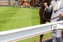 Arabian Horse Racing / Stéphane Lévêque is the newest addition to the UK training ranks. Based in Newmarket at Saint Wendred's he trains a select string of Arabians