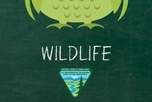 For the Classroom: Habitat and Wildlife / by Bureau of Land Management