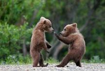 Animal Kung Fu
