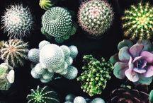Cactus&Suculentas