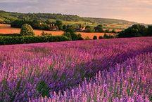 Kent, 'The Garden of England' / Showing some of the delights of this beautiful county.