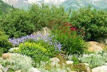 Colorado Gardens / Gardens all around Colorado
