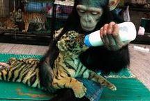 Животные - настроение, дружба