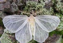. Fairytale Whimsy .