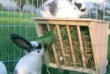 . Farm: Rabbits .