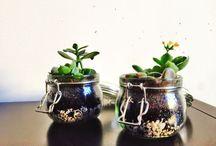 Kukat, puutarha ja muu viherpeukalon vipatus / Flowers, plants, gardeding