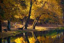 colorful autumn / Autumn