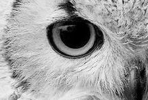 Owls / by Sara Aird