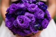 Wedding Ideas / by Michelle Goldey