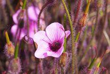 Fleurs Flowers / L'essentiel d'une vie