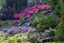 Jardins de rêves, gardens dreams / Pour rêver encore et toujours