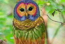 Love owls / by Myung Jordan