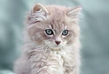 Chats cats / Adepte de la ronro thérapie