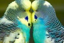Oiseaux, birds / J'adore les observer ils sont si jolis