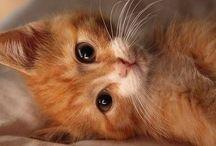 MY FURRRRR BABIES / My goldie baby and my 5 kitty babies / by Angel Barnett