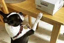 Furry Friends of Krispy Kreme / Four legged friends longing for the doughnuts they just can't have. / by Krispy Kreme