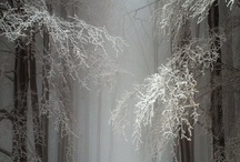 seasonal — winterscapes / beauty in all colors except green / by Dicentra spectabilis