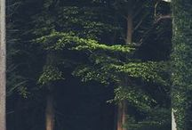 aesthetic — deep woods / midnight green / by Dicentra spectabilis