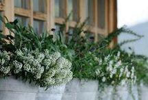 POLLICE VERDE / Un pot pourri di fiori, piante, vasi, attrezzi da giardino, 7 nani & co. per un garden strambo/romantico/selvaggio da fare invidia