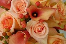 fleurs — peachy / peach, apricot, coral flowers / by Dicentra spectabilis