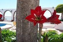 Flores de temporada / Saber como disfrutar de su explendor en cada epoca del año y adaptarlo a las nuevas tendencias