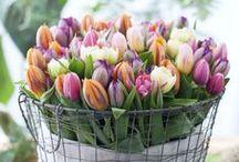 fiorivi....sfiorivano le violeeeee / fiori ,flowers ,fiori ,flowers