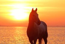 Horses / I'm a horse lover. If you have never had a horse that was you're best buddy, you haven't lived! / by Jayne Lassiter