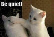 LOLCats / Grammatically incorrect but always funny pictures of cats. LOL! / by Cats And Kittens