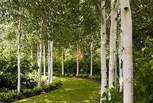 Landscape Architecture / Landscape Architecture, Garden Design, Urban Design, small achitecture (pergolas, benches...), inspiration...