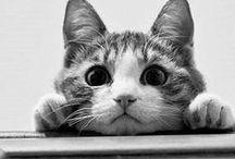 CAT / Meooooowwwww