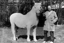 Historie / Foto's uit het archief van De Paardenkamp
