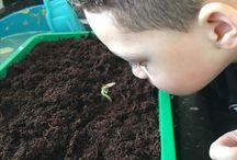 Pompoen zaadjes planten / Zaadjes planten in de kas en na 2 weken hebben de kinderen het grootste plezier om de zaadjes ieder uur verder te zien ontkiemen