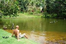 Spirit Vine Ayahuasca Retreats / Spiritual retreats and sacred plant ayahuasca ceremonies in the heart of the Brazilian rainforest - Itacare, Bahia.  http://spiritvine.net