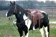 horses - pintos, paints, and such! / by Beth D