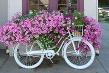 Flower Bike..... Love The look!