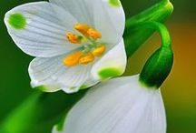 Flores-Λουλουδια / Λουλούδια
