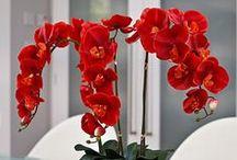 Orchids-Ορχιδέα / Λουλούδια