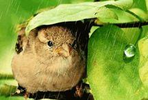 Doğa ve güzellikleri(Nature) / Doğa