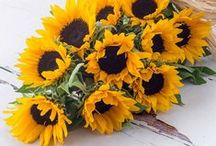 Gloriously Golden Sunflowers / Nothing says 'Hello Summer' more than a beautiful Sunflower.  Here's our inspiration for all things golden and yellow!