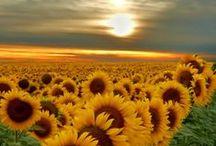 Flowers✿✿✿⊱╮ / A beleza das flores é  indescritível! / by Constancia de Azevedo