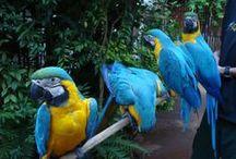 Aves e pássaros do mundo✯ / ✯A Mãe Natureza nos presenteia todos os dias com espetáculos maravilhosos e esses bichinhos são mesmo encantadores.✯ / by Constancia de Azevedo