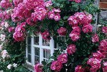 Portes et fenêtres❂~•✿•~❂ / As portas assim como as janelas, entreabertas significam possibilidades. Já as fechadas, podem significar o término ou algo que pode se iniciar. Cabe a cada um ter coragem para ver o que há lá adiante.  / by Constancia de Azevedo