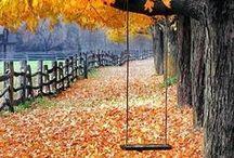 Automne☀✿ڿڰۣ☼ / ✿L'automne est une demi-saison se situant entre la saison chaude et la saison froide.  Les feuilles des arbres, elles se colorent alors en jaune ou orange, ou même rouge...  Quelle beauté!  J'adore l'automne.✿ / by Constancia de Azevedo